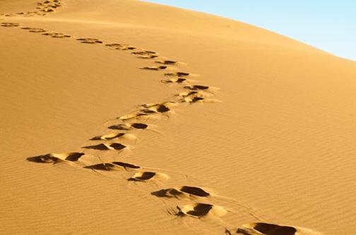 Footprint Expansion